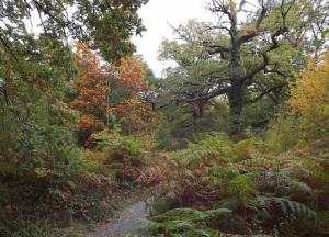 bosque-de-orgi-plantas