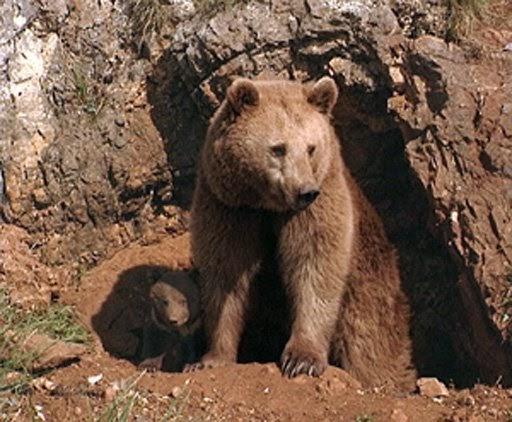 oso cueva